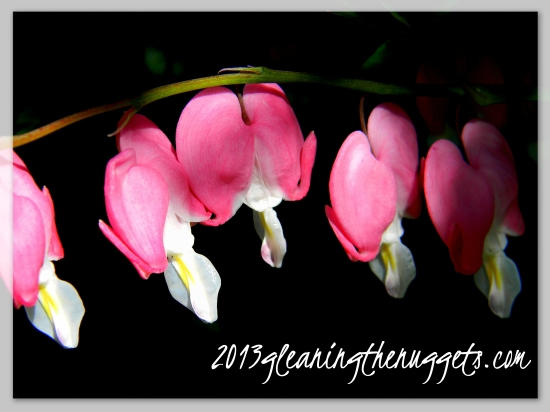Bleeding Heart with website