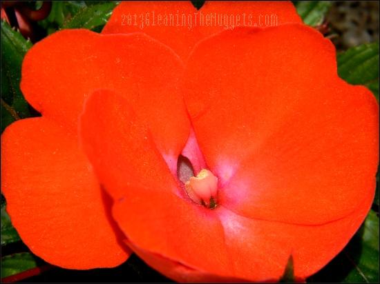 Orange Vibrant Flower