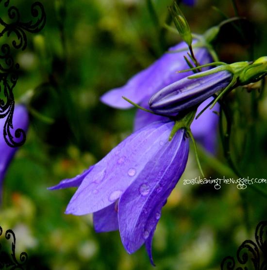 Purple Rain 2013 Border
